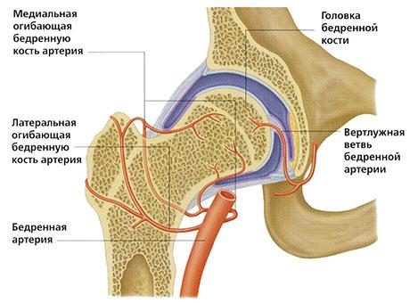 артерии-тбс
