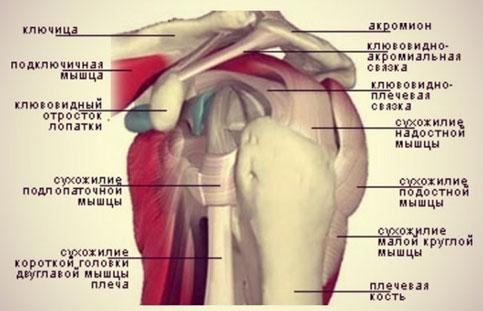 Переломы головки и анатомической шейки плеча: причины, симптомы, диагностика, лечение
